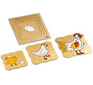 Puzzles ciclos de vida la gallina la unidad