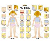 Puzzle el cuerpo humano en inglés