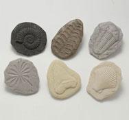 Fosiles lote 8 piezas