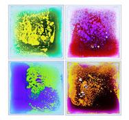 Baldosas sensoriales base trasparentes. Lote de 4 unds. los 4