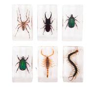Bloques con especímenes de insectos, 6 unidades